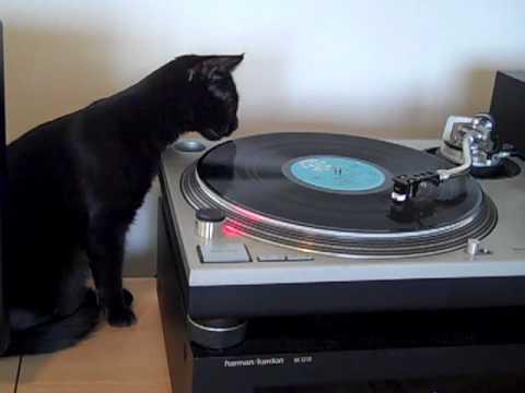 DJ_Cat